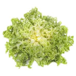 Salade frisée - Cat. 1