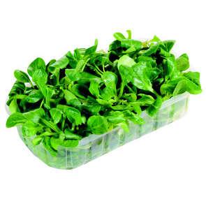 Salade mâche longue feuilles - Cat.1
