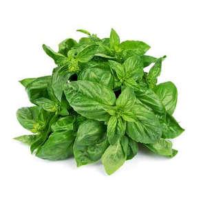 Herbe basilic frais - Cat. 1