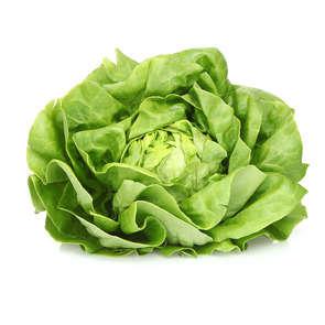 Salade Laitue - Cat. 1