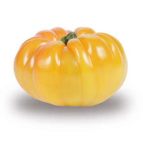 Tomate côtelée ananas - Cat.2